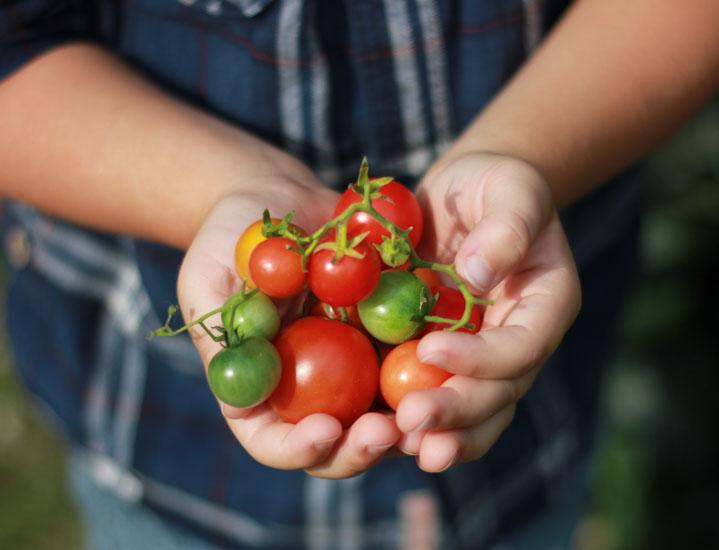 Sok warzywny z blendera to prosty i smaczny sposób na dostarczenie  witamin, minerałów i błonnika, który sprawdzi się w diecie odchudzającej